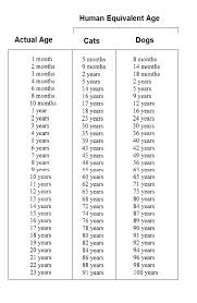 Puppy Age Chart Pet Age Chart To Compare Your Pets Age To Humans Year 6