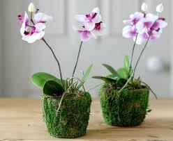 <b>Удобрения орхидеи</b>: способы, методы, виды подкормок