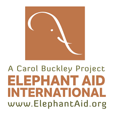 Image result for elephant aid international