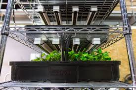 Best Led Grow Light For Peppers 2015 How To Give Seedlings Enough Light To Be Healthy Upstart