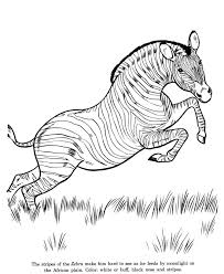Small Picture 38 best zebra images on Pinterest Zebras Coloring books and