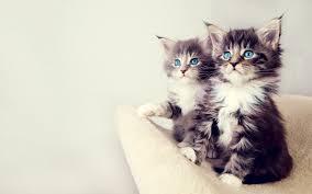 cute kittens wallpaper