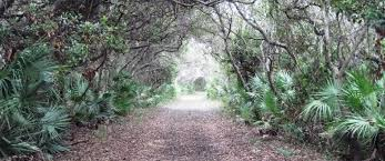 Image result for images of lower suwannee motor trail
