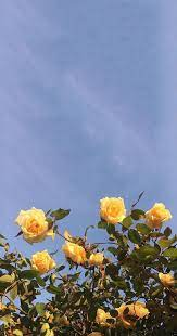 Aesthetic Flowers Wallpapers - Top Free ...
