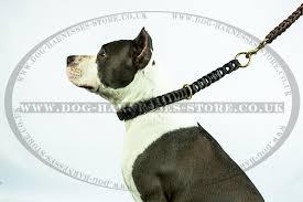 amstaff leash uk amstaff looks stunning with braided leather
