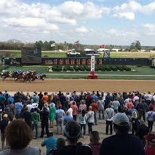 View From Our Box Seats Picture Of Oaklawn Racing Gaming