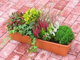 Bepflanzter Blumenkasten 60 Cm Wintergr N Bunt Pflanzen Versand
