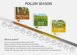Pollen Food Allergy Chart 10 Tips For Coping With Allergies Check This Pollen