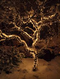 outdoor tree lighting ideas. Christmas Tree Light Ideas Inspiration Lights Outdoor Near Me Warm White Snowy String Garden Fairy Lighting