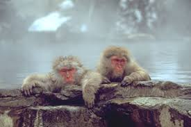 Monkey Uses Vending Machine Stunning Jigokudani Home Of The Worldfamous Snow Monkeys Is Situated In