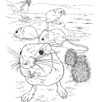 Small Picture Desert Animals Coloring Pages Surfnetkids