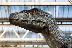 Download 53 raptor dinosaur free vectors. Jurassic Park Was Wrong Study Suggests Raptors Didn T Hunt In Packs Science In The News