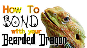 Bearded Dragon Care Sheet A Complete Guide For Beginners