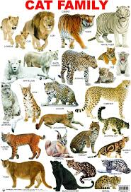 Cat Family Click Image To Close Cats Animals Cat Breeds