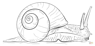 Small Picture Land snail coloring page Free Printable Coloring Pages