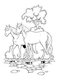 Kleurplaten Paradijs Kleurplaat Amika En Een Ander Paard