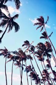 palm trees tumblr. Palm Trees Tumblr