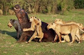 beautiful wild animals wallpapers. Exellent Wild And Beautiful Wild Animals Wallpapers W
