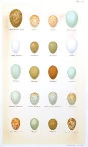 Egg Identification Chart Bird In Everything Identifying Birds Eggs