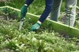 container gardening magazine. organic gardening:garden design gardening tips container garden soil kids magazine l