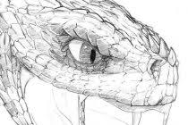snake head side view drawing. Snake Head Drawing 20 Views To Side View