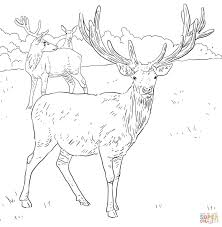 Small Picture Coloring Pages Animals Caribou Deer Coloring Page Deer Coloring