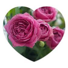 Коврик для мышки (сердце) <b>Розовые розы</b> #2671957 от d_ari ...