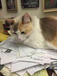 the five ldquo procrastination rdquo a photo essay starring my cat acirc san cat1