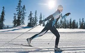 Жизнь леса класс окружающий мир ДоклаДики Доклад по физкультуре на тему Лыжный спорт