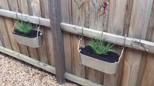 Kangaroo Paw in Pots to break up that long fence. Fence planters on a  budget. Vertical garden