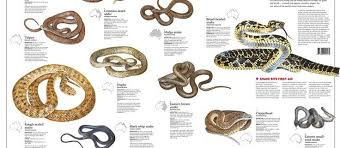 Australian Snake Chart Gold Coast On Snake Alert The First Aid You Need To Know