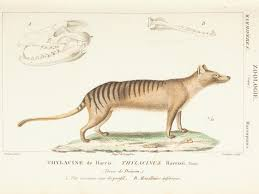 Science Of Animals Rome Fontanacountryinn Com