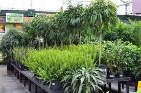 trees gertens garden center nursery