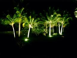 Palm Tree Lights Solar Lighting Palms At Night Discussing Palm Trees Worldwide