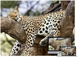 Amazing Wildlife and Animal Wallpapers ...