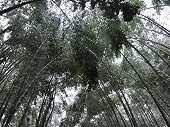 雪の嵐山 竹林の小径の写真