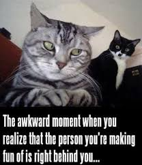 funny cat meme with a striped cat looking over his shoulder at a ... via Relatably.com