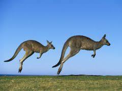 КЕНГУРУ ЖИВОТНОЕ АВСТРАЛИИ Кенгуру Энциклопедия Материал для  Обитает это животное лишь в одном месте земного шара на материке загадок и неожиданностей в Австралии Оно не похоже ни на какого другого зверя