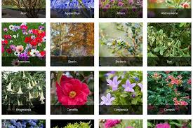 Help Advice Tips From The Rhs On All Kinds Of Plants