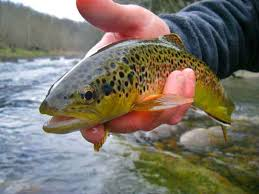 Fly Fishing South Holston River