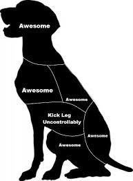 Dog Petting Chart Fixed Imgur