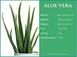 Best-Indoor-plants-Houseplants-Your-Home Clean-Air Healthy-