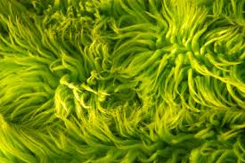 green carpet texture. Lime Green Shag Rug Texture   By Abby Lanes Carpet