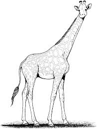 Small Picture Color Book GiraffeBookPrintable Coloring Pages Free Download