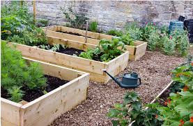 raised garden bed with treated wood