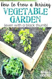 What Should I Plant In My Vegetable Garden Cleanshieldnews