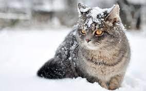 Cats, Winter cat ...