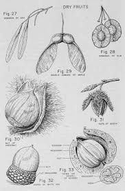 Angiosperm Vs Gymnosperm Venn Diagram Angiosperms Worksheet Gymnosperms And Angiosperms Worksheet