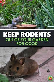rodents garden pests rodent repellent