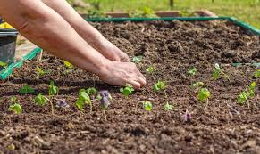 for the best gardening results make sure to read the directions on seed packets regarding